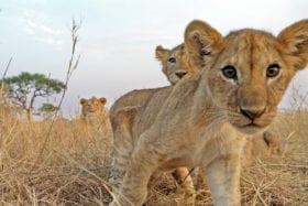 Serengeti .