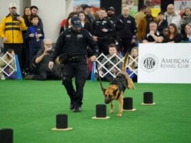 AKC unleashes programming plans